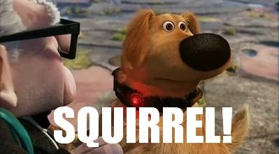 dug_squirrel