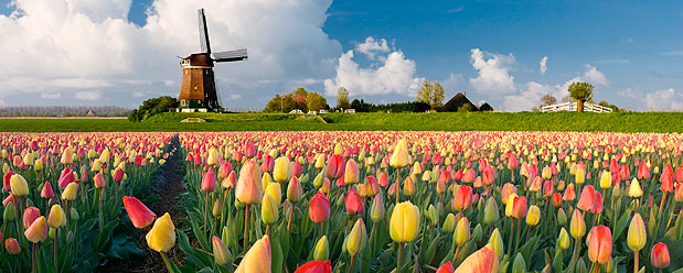 holland-header-short